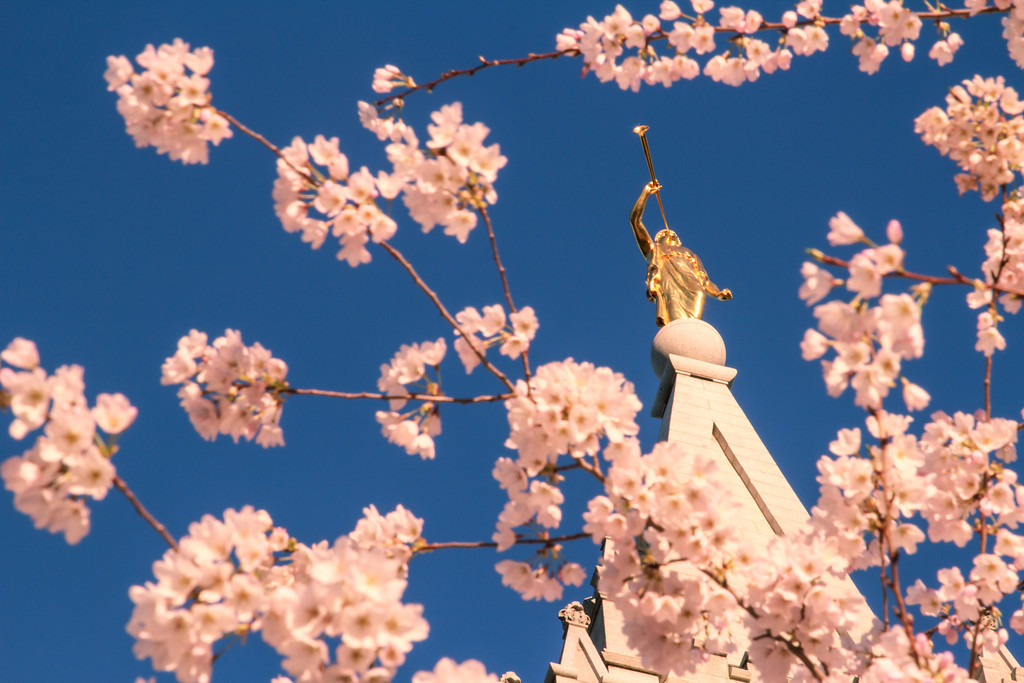Salt Lake Temple Moroni with Spring blossoms