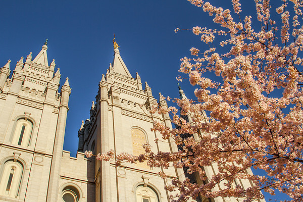 Salt Lake Temple with Spring blossoms