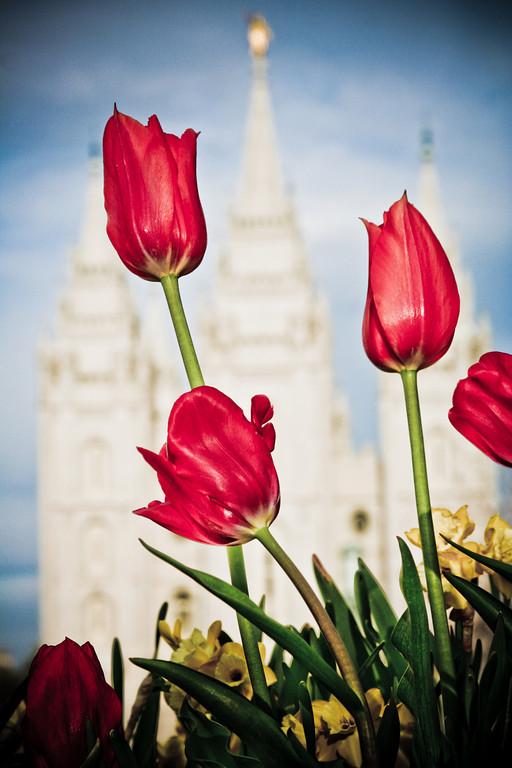 Salt Lake Temple with Spring Flowers